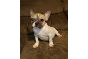 Frenchtons for sale
