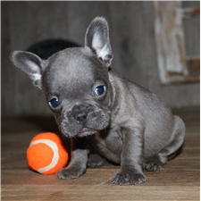View full profile for Top Knotch Puppies