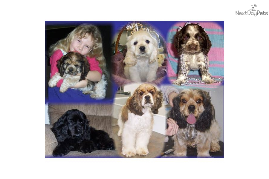Accolades and breeding experience for your Malti Poo - Maltipoo breeder