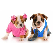 View full profile for Luvin Companion Pets