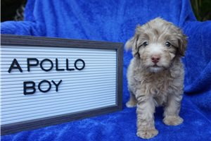 Picture of Apollo Toy Tampa