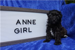 Picture of Anne Micro Tampa