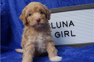 Picture of Luna Toy Tampa