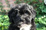 Picture of Handsome and Curly Black Male - Ready Now!