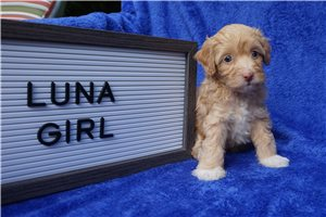 Picture of Luna Tampa Toy