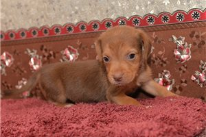 Doxles for sale