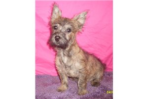 Picture of Cairn Girl