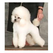 View full profile for Abounding Poodles