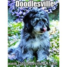 View full profile for Doodlesville