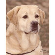 View full profile for Cherry Oaks Labradors