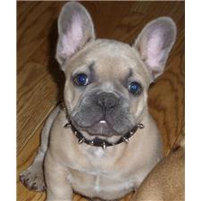 View full profile for Preferred Companions Pets
