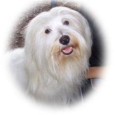 View full profile for El Morro Havanese