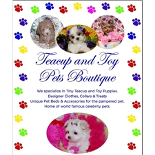View full profile for Teacup And Toy Pet Boutique