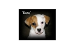 Picture of a Kai Dog Puppy