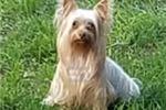 Picture of Tovi