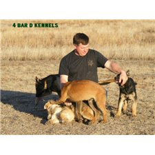 View full profile for 4 Bar D Kennels