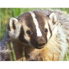 View full profile for Badgerden