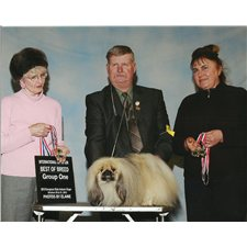 View full profile for Northwind Pekingese