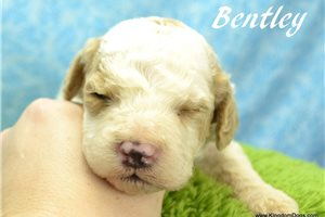 Picture of Bentley