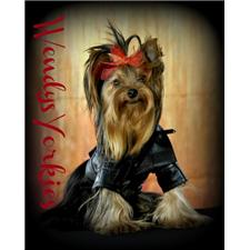 View full profile for Wendys Yorkies