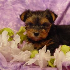 View full profile for SoonerPuppies.com