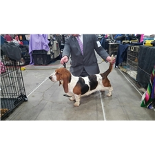 View full profile for Bedrock Basset's