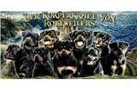 Picture of Der Korperkraft Von Rottweilers