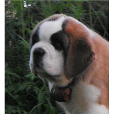 View full profile for Saints4Life Saint Bernard's
