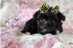 Picture of Chipoo female Gucci flashy!