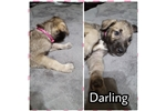 Picture of Darling
