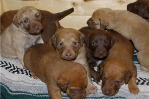 Picture of ASD Chessie Boys