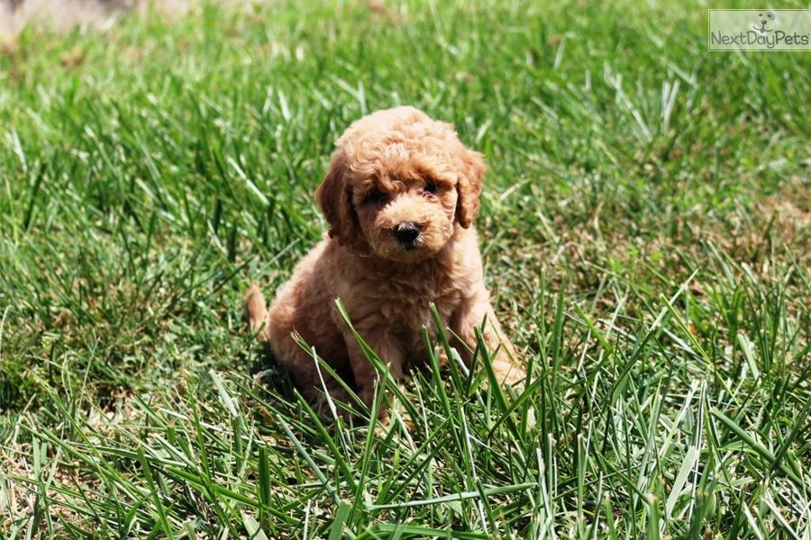 Mixedother Puppy For Sale Near West Palm Beach Florida
