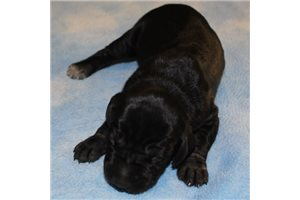 Picture of Blackie