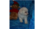 Picture of Little Snow Princess...Soooo Cuddly and Sweet!