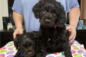 Picture of Ediths pups