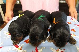 Picture of Hope pups