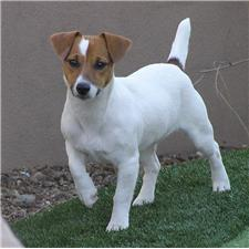 View full profile for Star Valley Russell Terriers