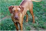 Picture of AKC Athena