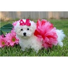 View full profile for Princess Puppies