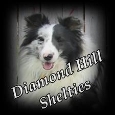 View full profile for Diamond Hill Shelties