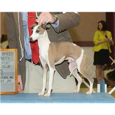 View full profile for texasitaliangreyhounds.com