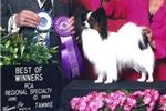 Picture of AKC Tiny Tim