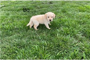 Picture of AKC BO