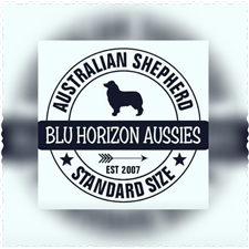 View full profile for Blu Horizon Aussies