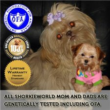 View full profile for Shorkie World