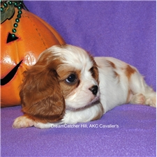 View full profile for Dreamcatcher Hill Puppies And Rescue