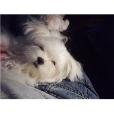 View full profile for National Maltese and Small Dog Rescue Alliance