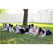 View full profile for Highland Border Collies
