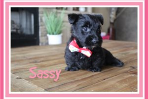 Picture of Sassy