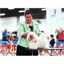 View full profile for Fausthouse Havanese